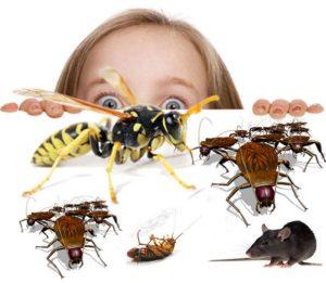 شركة رش مبيدات بصبيا