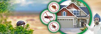 شركة مكافحة حشرات بصبيا